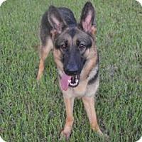 Adopt A Pet :: Violet - Houston, TX