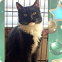Adopt A Pet :: Blake - East Brunswick, NJ