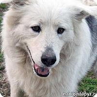 Adopt A Pet :: Mia - Beacon, NY