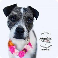 Adopt A Pet :: Maxine - Castaic, CA