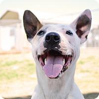 Adopt A Pet :: Daisy - Stillwater, OK