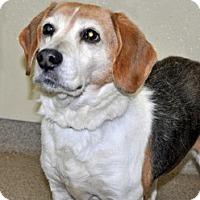 Adopt A Pet :: Buddy - Port Washington, NY