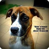 Adopt A Pet :: Abby - Gadsden, AL