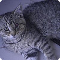 Adopt A Pet :: Kisa - Warren, MI