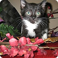 Adopt A Pet :: Mandalay - Clearfield, UT