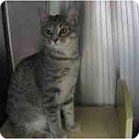 Adopt A Pet :: Gracie - Greenville, SC
