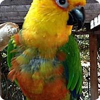 Adopt A Pet :: COSMO - Mantua, OH