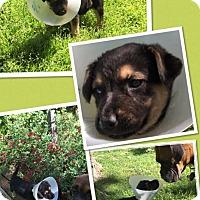 Adopt A Pet :: Miguel - Scottsdale, AZ