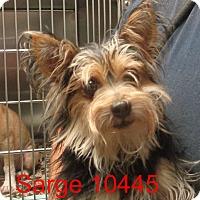 Adopt A Pet :: Sarge - Greencastle, NC