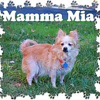 Adopt A Pet :: Mamma Mia - Fallston, MD