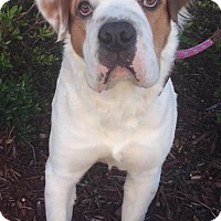 Adopt A Pet :: Bubbles - Gainesville, FL