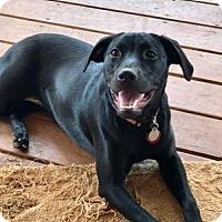 Adopt A Pet :: Delilah - Huntsville, AL