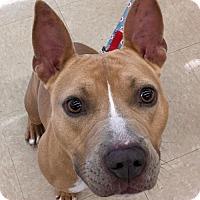 Adopt A Pet :: Hina - Vancouver, WA