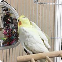 Adopt A Pet :: Beauford & Marlow - Punta Gorda, FL