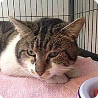Adopt A Pet :: Tory - Hanna City, IL