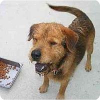 Adopt A Pet :: River - Alexandria, VA