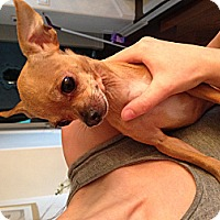 Adopt A Pet :: Theodore - Los Angeles, CA