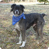Adopt A Pet :: Jackson - Mocksville, NC