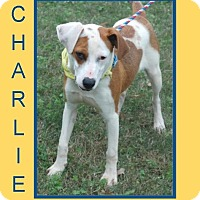 Adopt A Pet :: CHARLIE - Dallas, NC