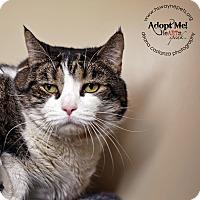 Adopt A Pet :: Mystic - Lyons, NY