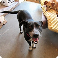 Adopt A Pet :: Guinness - ME - Warren, ME