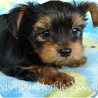 Adopt A Pet :: Dakotah - Palm City, FL