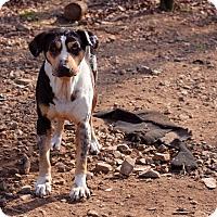 Adopt A Pet :: April - Mississauga, ON