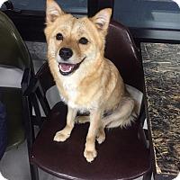 Adopt A Pet :: Lynn - Fairfax, VA