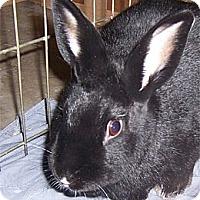 Adopt A Pet :: ODETTE - San Clemente, CA