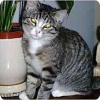 Adopt A Pet :: Nicholas - Modesto, CA