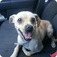 Adopt A Pet :: Buddy - Anaheim, CA