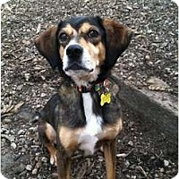 Adopt A Pet :: PEACHES - Dennis, MA