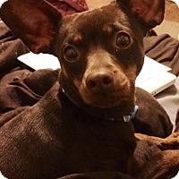Adopt A Pet :: Monet - Nashville, TN