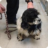 Adopt A Pet :: Freckles -Adopted! - Kannapolis, NC