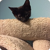 Adopt A Pet :: Onyx - Weatherford, TX