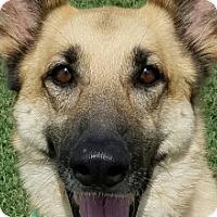 Adopt A Pet :: Roxanne - Knoxville, TN