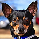 Adopt A Pet :: Guiness