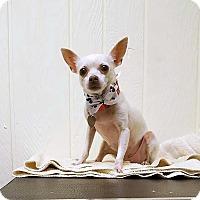 Adopt A Pet :: Spice - Tavares, FL