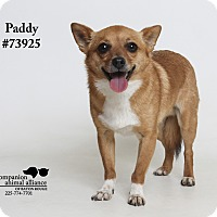 Adopt A Pet :: Paddy  (Foster Care) - Baton Rouge, LA