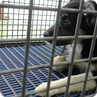 Adopt A Pet :: URGENT 4/27 @ DEVORE - San Bernardino, CA