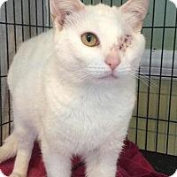 Adopt A Pet :: Sugar - Breinigsville, PA