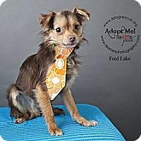 Adopt A Pet :: Fred Lake - Shawnee Mission, KS