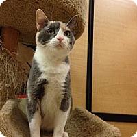 Adopt A Pet :: Sally - Monroe, GA