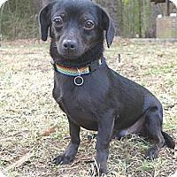 Adopt A Pet :: Ernie - Mocksville, NC