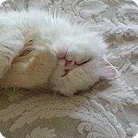 Adopt A Pet :: Zoe - Beverly Hills, CA