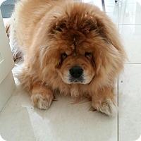 Adopt A Pet :: Bam Bam - Tillsonburg, ON