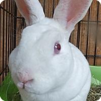 Adopt A Pet :: Fin - Foster, RI