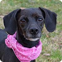 Adopt A Pet :: Flower - Mocksville, NC