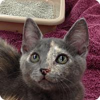 Adopt A Pet :: Iggy - Redondo Beach, CA