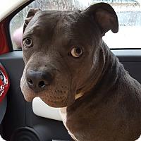 Adopt A Pet :: Ghengis - Orlando, FL